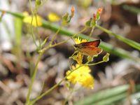 Balade aux papillons