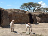 Tanzanie/Kenya, à la découverte du peuple Massaï