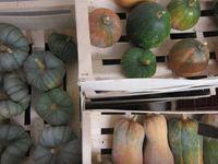 Octobre est à Biopousses ! Les cultures d'été cèdent peu à peu la place aux jeunes pousses hivernales et les récoltes se succèdent pour donner de jolies couleurs pastel à notre lieu de travail...