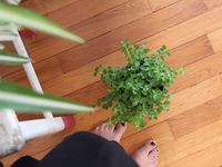 Urban Jungle Bloggers * Plantselfie