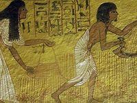 Maillons essentiels de l'économie, les paysans et le blé, l'orge, mais aussi la salade, l'ail... (6) en Égypte ancienne !