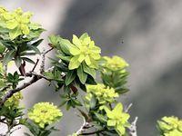 Les plantes médicinales qui poussent en grande variété à Bouzezga  sont une véritable mine d'or...