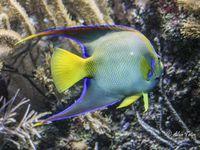 Album aquarium