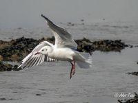 Album - Les-oiseaux-de-la-mer