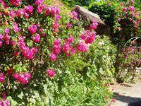 Le village de Gerberoy et ses roses