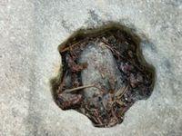 Le mystérieux trou de forage en forme d'étoile à sept branches de Volda, en Norvège