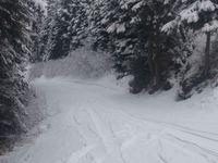 Dimanche matin, descente avec un peu de poudreuse par la piste forestière jusqu'à Termignon.