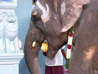 Cliquer sur les photos pour les agrandir : avec Lakshmi à Pondichéry