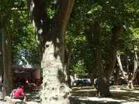 Céreste, fin de la descente de Montfuron et de l'ambiance à Vinon s/ Verdon