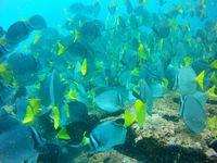 Une semaine aux Galápagos. 8/15 mai 2015