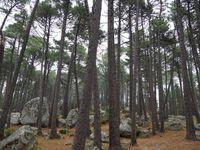 Ph1 : Sartène. Ph2 : Forêt de l'Ospedale U Spidali. Ph3 : Sainte-Lucie de Tallano