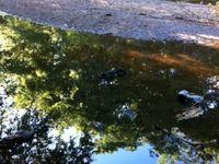 Une balade au site Corot pour essayer de trouver un peu de fraîcheur...