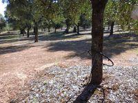 Travail dans les oliveraies