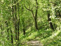 Le groupe dans une prairie avant de suivre le joli sentier dans les bois