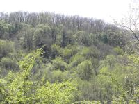 Merveilleux petit sentier à flanc de colline boisée... et les  verts du Printemps !