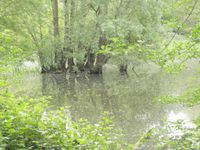 Compte-rendu de la Balade &quot&#x3B;Zones humides de la Confluence Ariège – Garonne&quot&#x3B; (31) du 15 Avril 2017