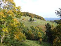 Balade dans les Vosges (5)