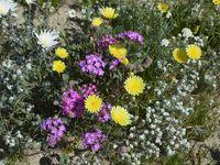 Dans le champ de fleurs jaunes...