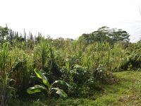 L'environnement de la cabane : nous sommes au milieu de la nature entourées de canne à sucre et de végétation luxuriante! :-)