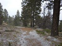 La neige recouvre petit à petit le sol... C'est beaaaau!
