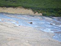 Denali National Park (jour 2)