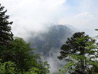 Paysages durant la première partie de l'ascension. On peut voir des araucarias, arbres typiques de la région.