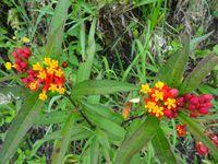 Toujours la flore locale