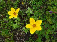 Le chemin de la billetterie du site à la porte 3 : jolies fleurs et fossiles !
