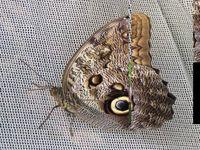 La serre aux papillons à La-Queue-aux-Yvelines.