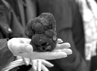 Le blog des ampélophiles 11170 et de la truffe