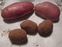 J'ai fait des patates pour le goûter