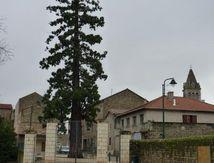 Séquoias de Pélussin