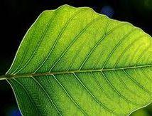 10.1 La photosynthèse