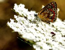 Insectes - Arachnides ( 2 )
