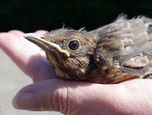 A petit oiseau, ...