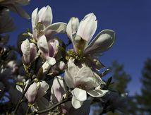 Le printemps au parc des Glacis