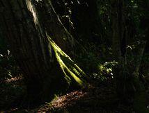 Dans la forêt !