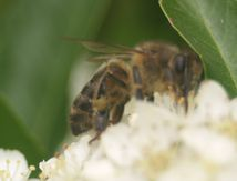 http://actions.pollinis.org/actions/stop-neonics-fr