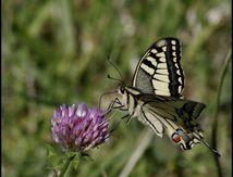 Papillons de Bretagne