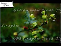 Nature de Jardin