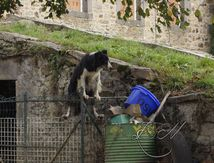 Le Border Collie acrobate ...
