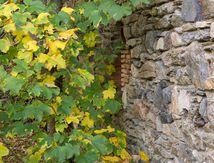 L'automne du vieux mur de pierres