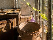 La plante allergique au pot de fleur - URBEX  ...