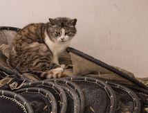 Le chat de Mauguio 34 ...