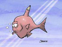 #EatenFish #addafish #ManusIsland soutien à EatenFish