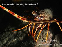 Royale Langouste, article dans Plongeurs International
