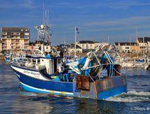 La vie du Port de La Turballe