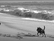 Jeux de plage en hiver