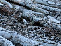 Bois coupés, Mélèzes, textures, couleurs, paysages, balade dans la forêt du Sapet