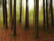 Pluie de printemps sur le bois d'Epesses